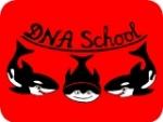 Курсы английского DNA School
