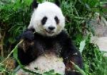 Курсы английского Panda Plus